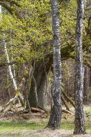 Schwäbisch Fränkischer Wald