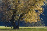Birken im NSG Schopflocher Moor