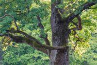 Bäume und Sträucher