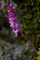 Blütenpflanzen