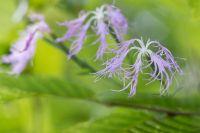 Pflanzen und Pilze