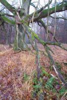 Waldweide