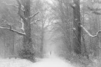 Schneetreiben im Rotwildpark