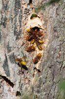 Ameisen, Bienen und Wespen