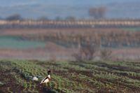 Entenvögel, Taucher und Ruderfüßer