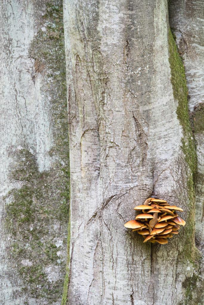 Pilze und Buche