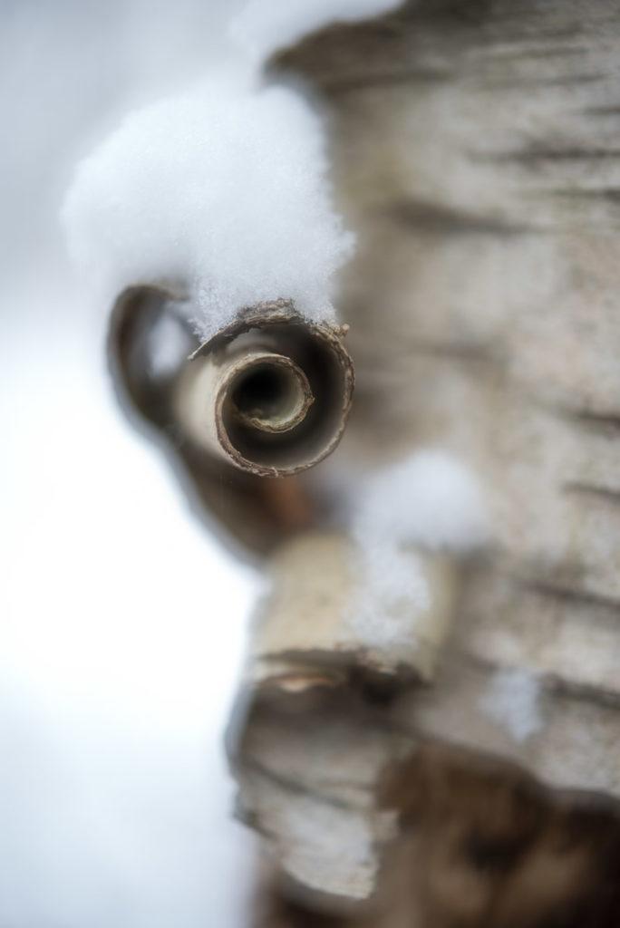 Birkendetail