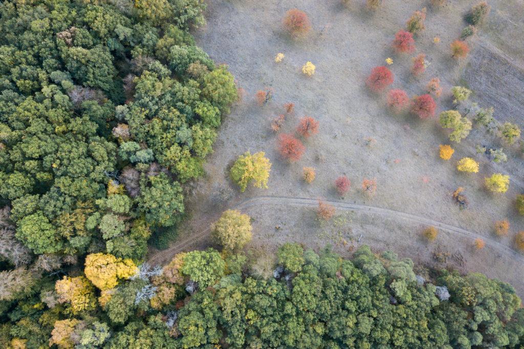 Herbst am Hornberg