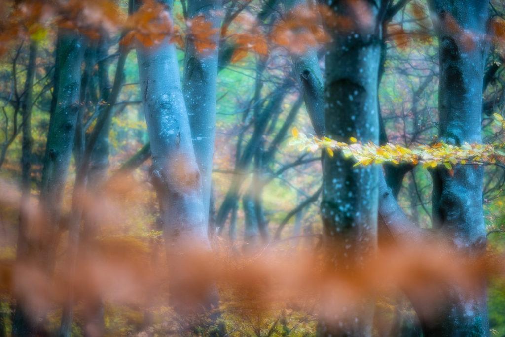 Herbst im Buchenwald