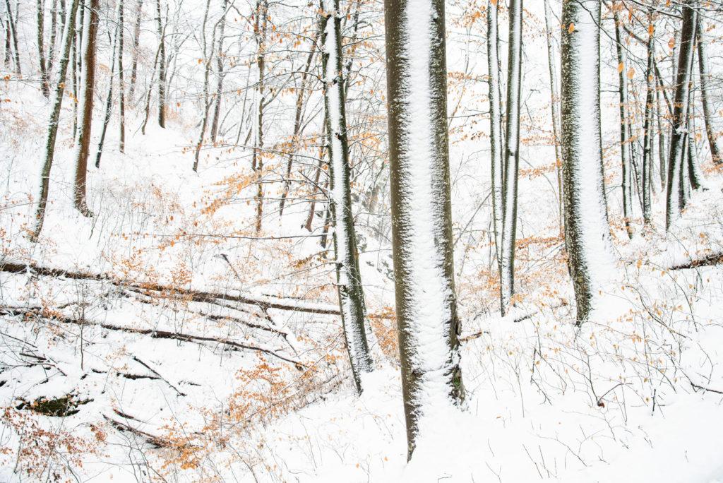 winterlicher Buchenwald