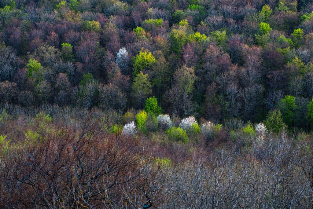 Frühling im Hangwald