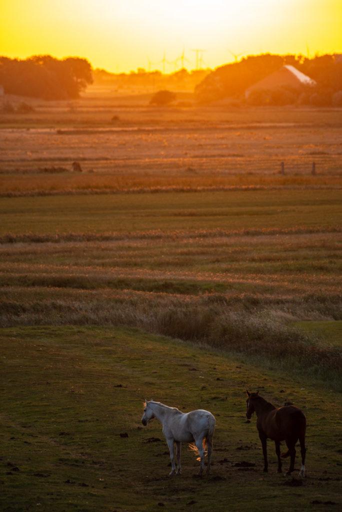 Sonnenaufgang in Westerhever
