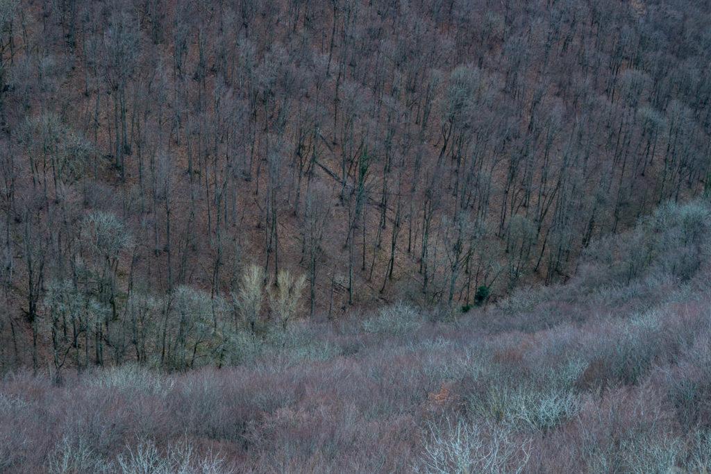 Hangwald am Albtrauf