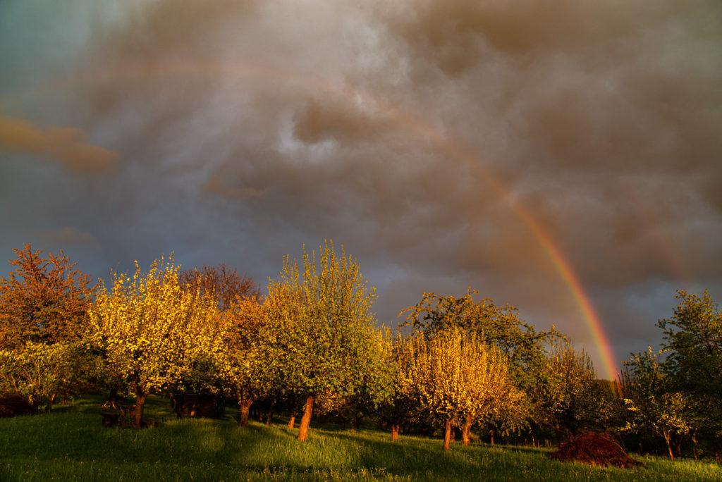 Regenbogen über Streuobstwiese